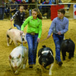Tennessee State Junior Market Hog Show at MTSU.