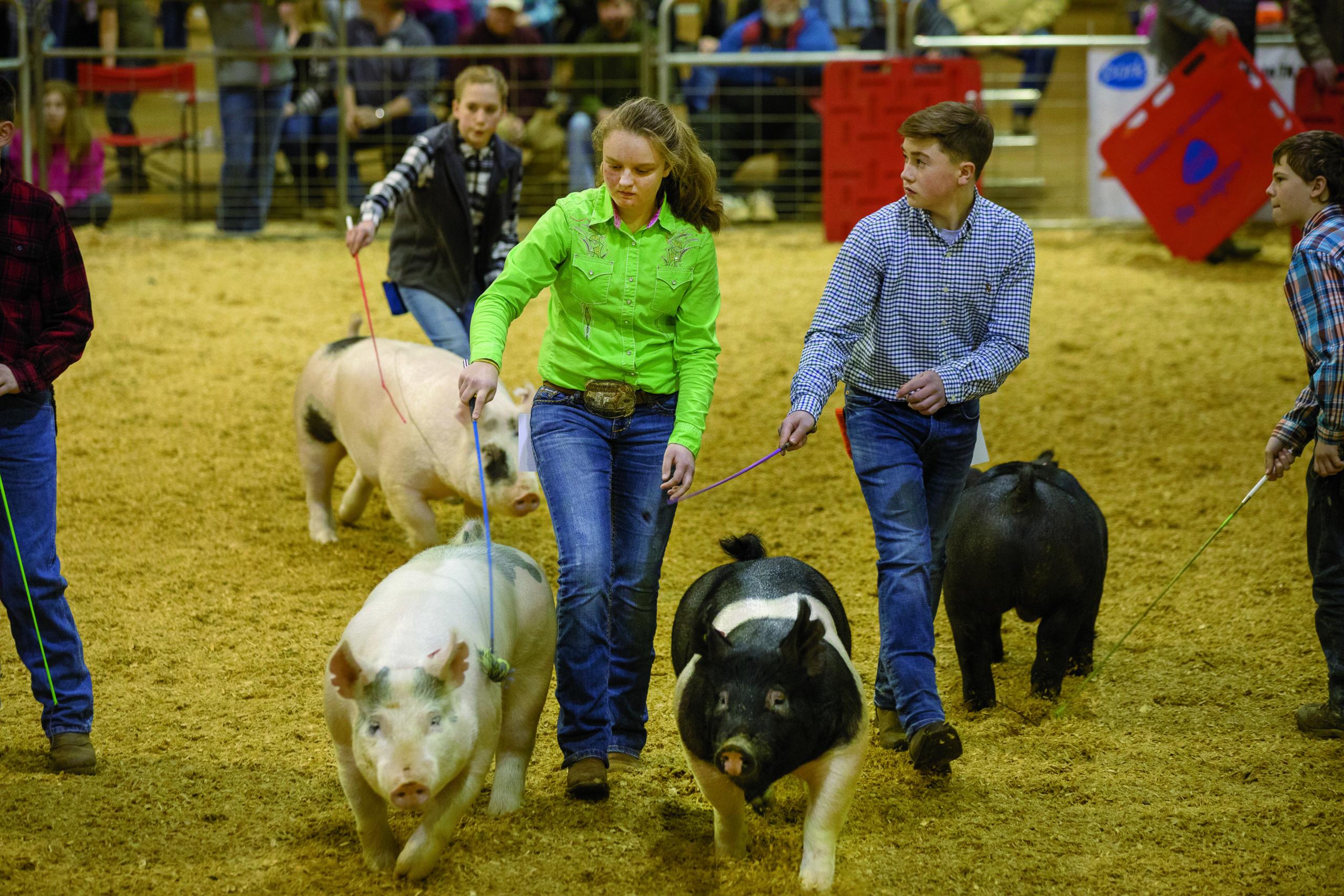 Tennessee State Junior Market Hog Show at MTSU.