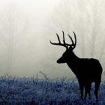 Learn How to Deer Hunt in One Weekend!