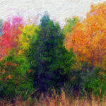 Poster Contest - Colorful trees