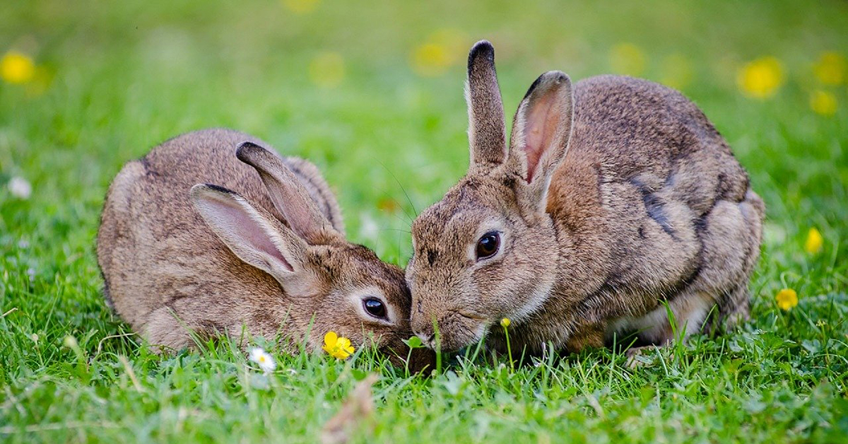 Wildlife - Rabbits