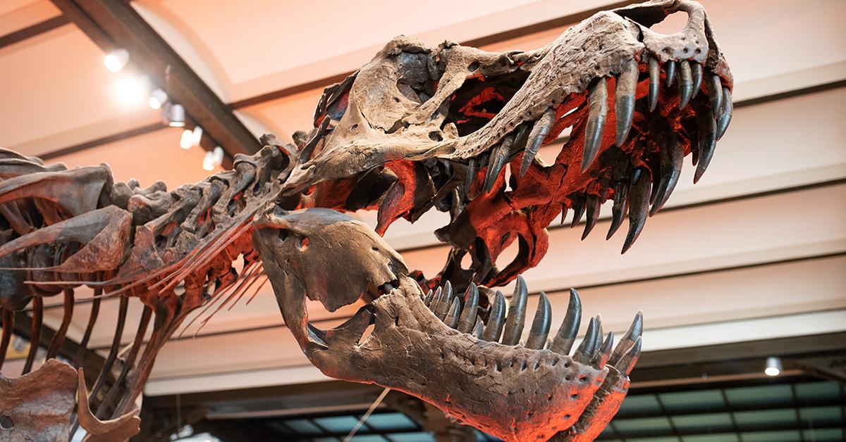 Youth Science - Dinosaur Shelton