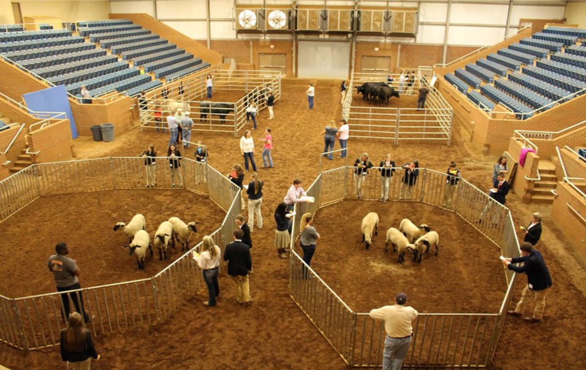 State 4-H Livestock Judging Competition