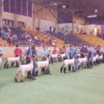 2020 Sheep Expo