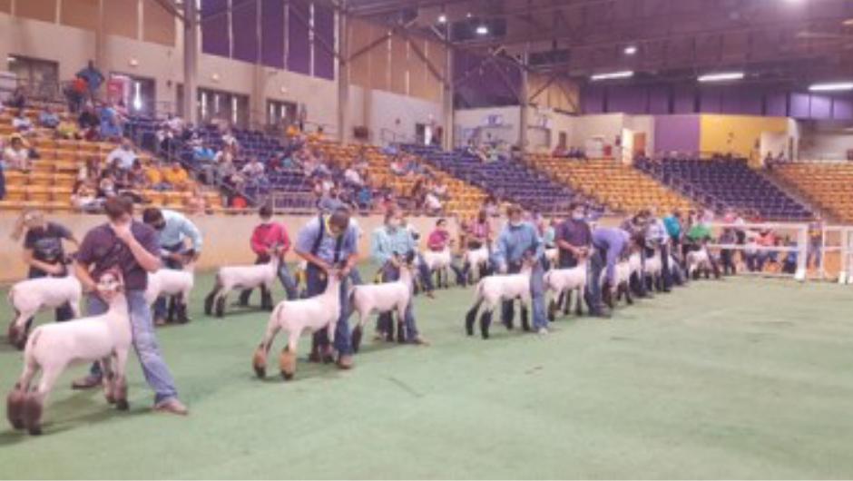 2020 Sheep Expo
