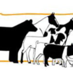 2021 Youth Animal Science Show