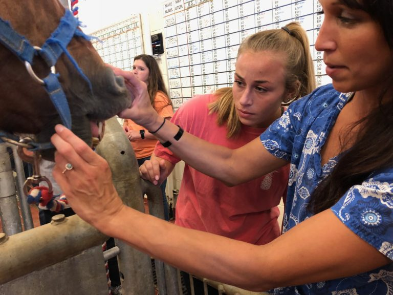 students checking a horse's teeth