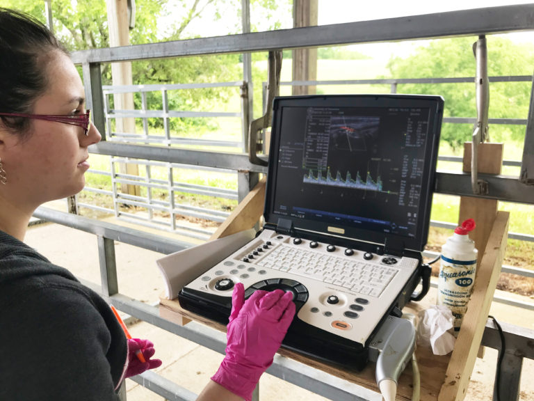 Student analyzing an ultrasound scan