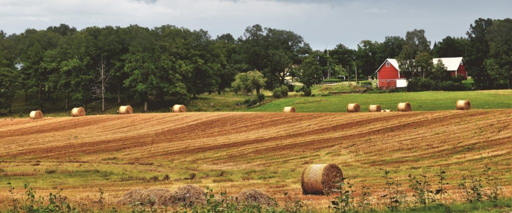 Bails of rolled hay