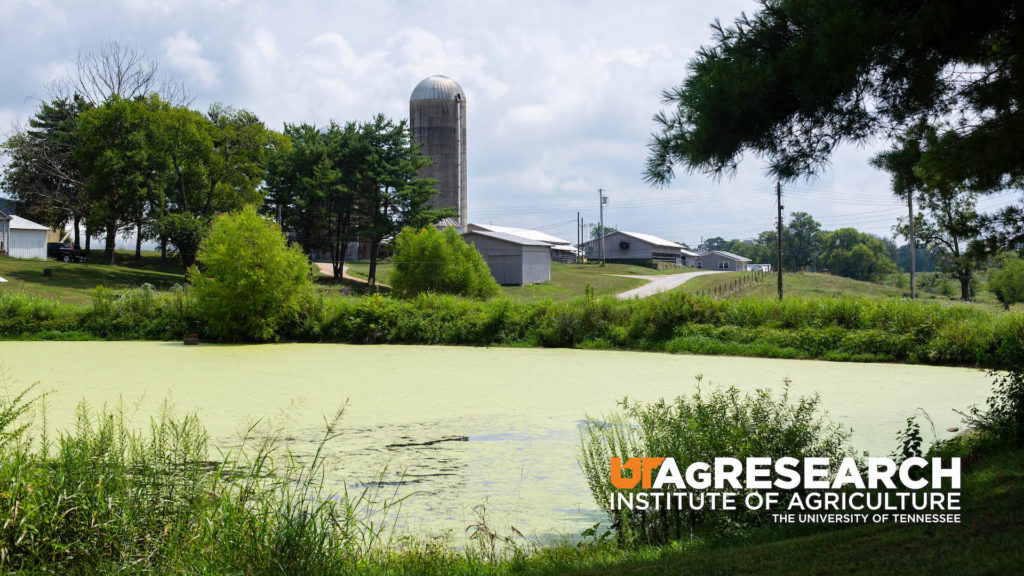 A pond and silo on the grounds of the Middle Tennessee AgResearch and Education Center