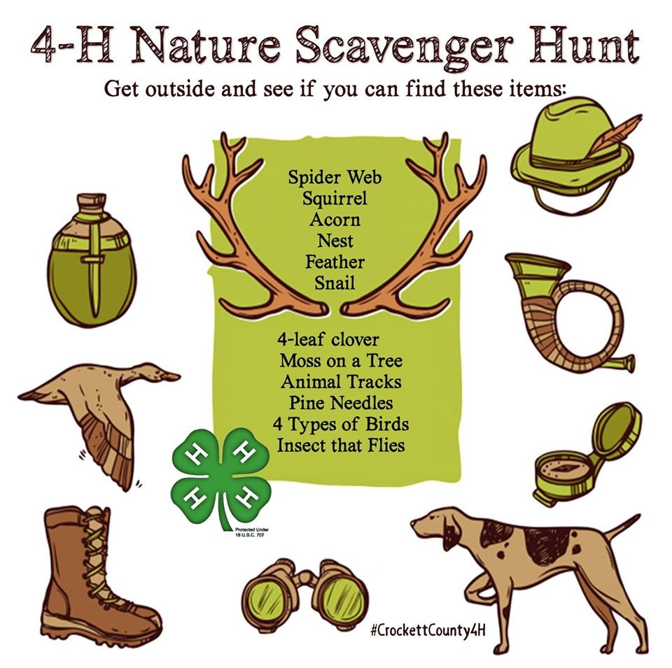 4-H Nature Scavenger Hunt