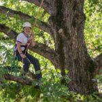 Woman limb walking in a tree
