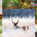 Collage of images depicting animals, plants and people