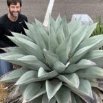 Picture of Jason Reeves with whale's tongue agave plant