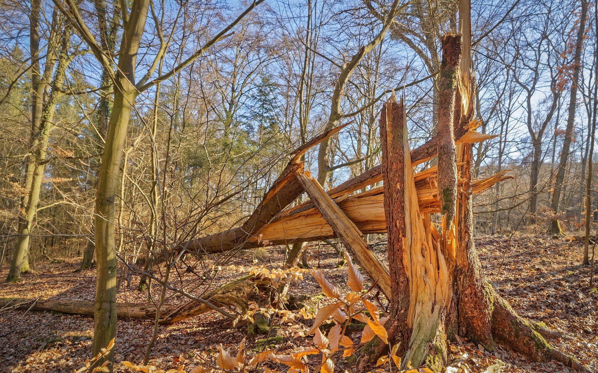 Picture of fallen tree