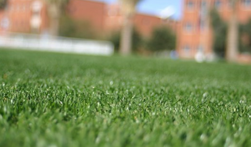 close up of turfgrass
