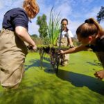 Picture of students testing design in a wetland