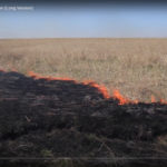A prescribed fire crawls through an open field.