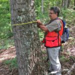 Picture of Kevin Hoyt measuring a tree
