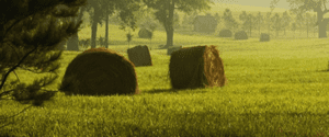 Items concerning Forage Production