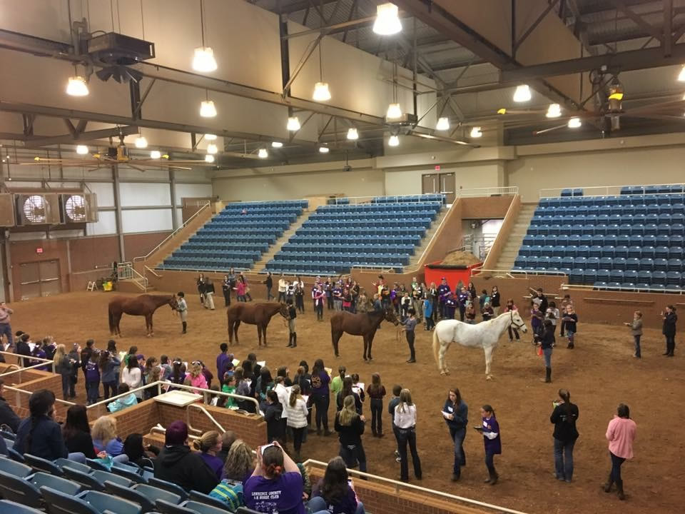Items concerning Horse Judging