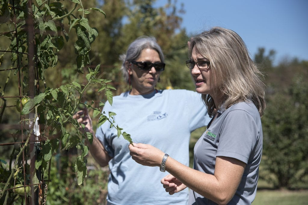 Two women examine a tomato plant in a garden
